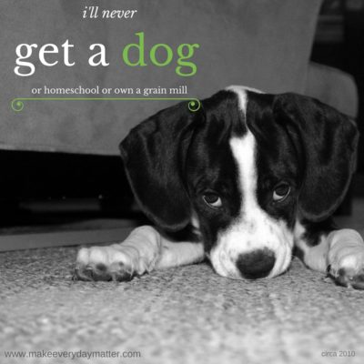 I'll never get a dog…