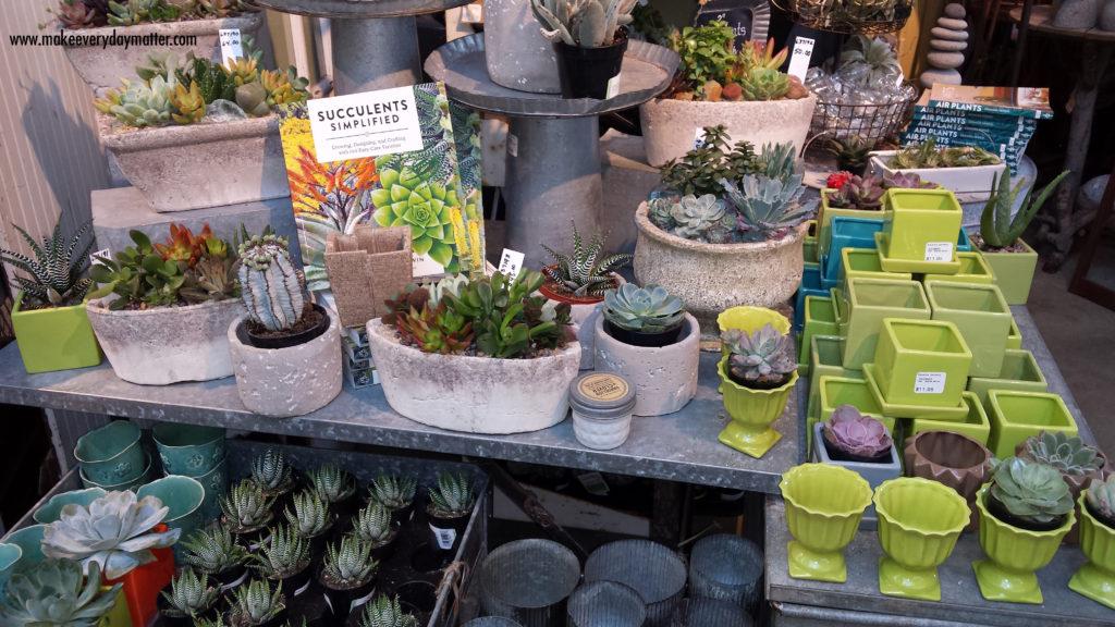 cactus store 1 watermark