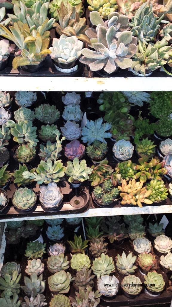 cactus store 2 watermark
