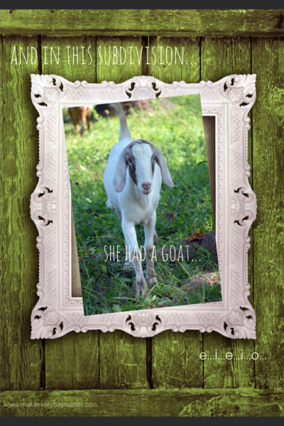 And in this subdivision she had a goat….e…i…e…i…o